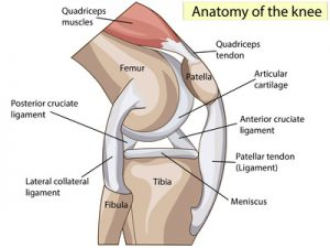 ACL Operation Injury Facts - A...
